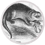 Otter, 1873 Round Beach Towel