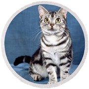 Outstanding American Shorthair Cat Round Beach Towel