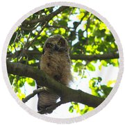 Owl In Central Park Round Beach Towel