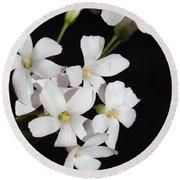 Oxalis Flowers 3 Round Beach Towel