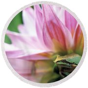 Pacific Tree Frog In A Dahlia Flower Round Beach Towel