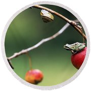 Pacific Tree Frog On A Crab Apple Round Beach Towel