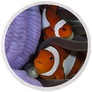 Pair Of Clown Anemonefish, Indonesia Round Beach Towel
