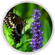 Palamedes Swallowtail Butterfly Round Beach Towel
