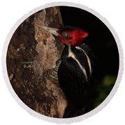 Pale-billed Woodpecker Round Beach Towel