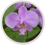 Pale Pink Orchid Round Beach Towel