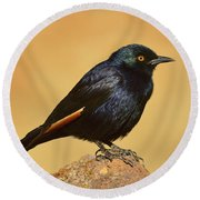 Pale-winged Starling Round Beach Towel