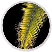 Palm Frond Against Black Round Beach Towel