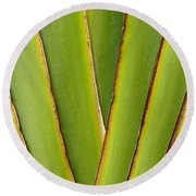 Palm Frond Detail Round Beach Towel