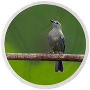 Palm Tanager Round Beach Towel