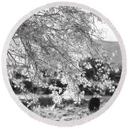 Palo Verde Blossoms Round Beach Towel