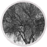 Palo Verde Tree 2 Round Beach Towel