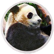 Panda In Tree Round Beach Towel