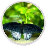 Papilio Lowii II Round Beach Towel