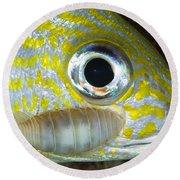 Parasitic Isopod On Grunt, Belize Round Beach Towel