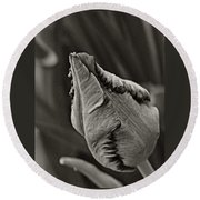 Parrot Tulip In Black And White Round Beach Towel