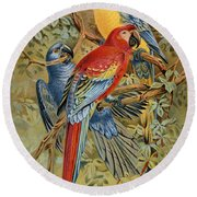 Parrots: Macaws, 19th Cent Round Beach Towel