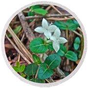 Partridge Berry Flower - Mitchella Repens Round Beach Towel