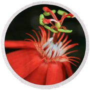 Passiflora Vitifolia - Scarlet Red Passion Flower Round Beach Towel