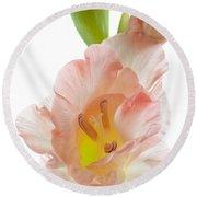 Peach Flushed Gladiolus Round Beach Towel