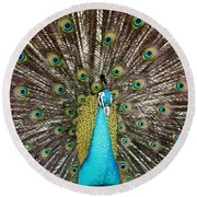 Peacock Plumage Feathers Round Beach Towel