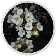Pear Blooms And Tree Round Beach Towel