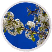 Pear Spring Round Beach Towel by Chad Dutson