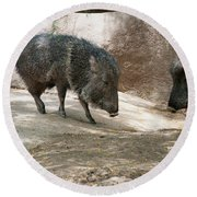 Peccary Round Beach Towel