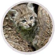 Peeking Out - Bobcat Kitten Round Beach Towel
