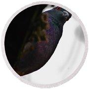 Peeking Pigeon Round Beach Towel by DigiArt Diaries by Vicky B Fuller