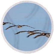 Pelican Crew In Flight Round Beach Towel