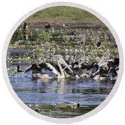 Pelicans At Knuckey Lagoon Round Beach Towel