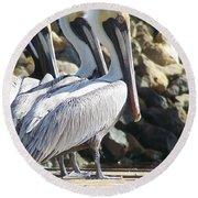 Pelicans Of Keaton Beach Canal Round Beach Towel
