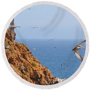 Pelicans Off The Point Round Beach Towel