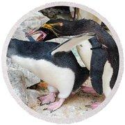 Penguins Round Beach Towel