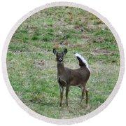 Pennsylvania White Tail Deer Round Beach Towel