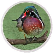 Perched Wood Duck Round Beach Towel
