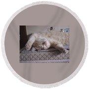 Percy Cat Sleep Stylist Round Beach Towel