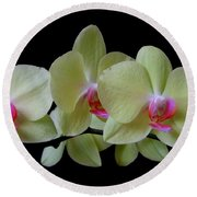 Phalaenopsis Fuller's Sunset Orchid No 1 Round Beach Towel