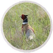 Pheasant In The Grass Round Beach Towel
