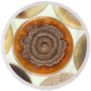 Phomopsis Mold Cultures Round Beach Towel