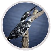 Pied Kingfisher Eating Round Beach Towel