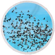 Pigeon Flight Round Beach Towel