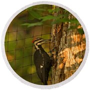 Pileated Woodpecker Round Beach Towel