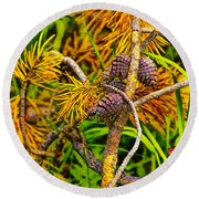 Pine Cones And Needles On A Branch Round Beach Towel