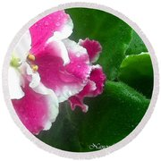 Pink African Violets And Leaves Round Beach Towel