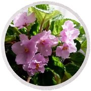 Pink African Violets Round Beach Towel