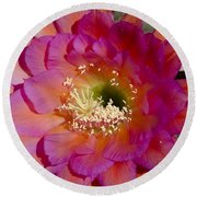 Pink And Orange Cactus Flower Round Beach Towel