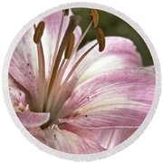 Pink Asiatic Lily Round Beach Towel