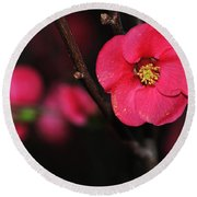 Pink Blossom In The Evening Round Beach Towel